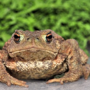 A toad.